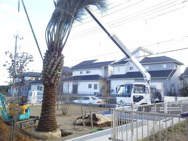 埼玉県内ココスヤシ植栽