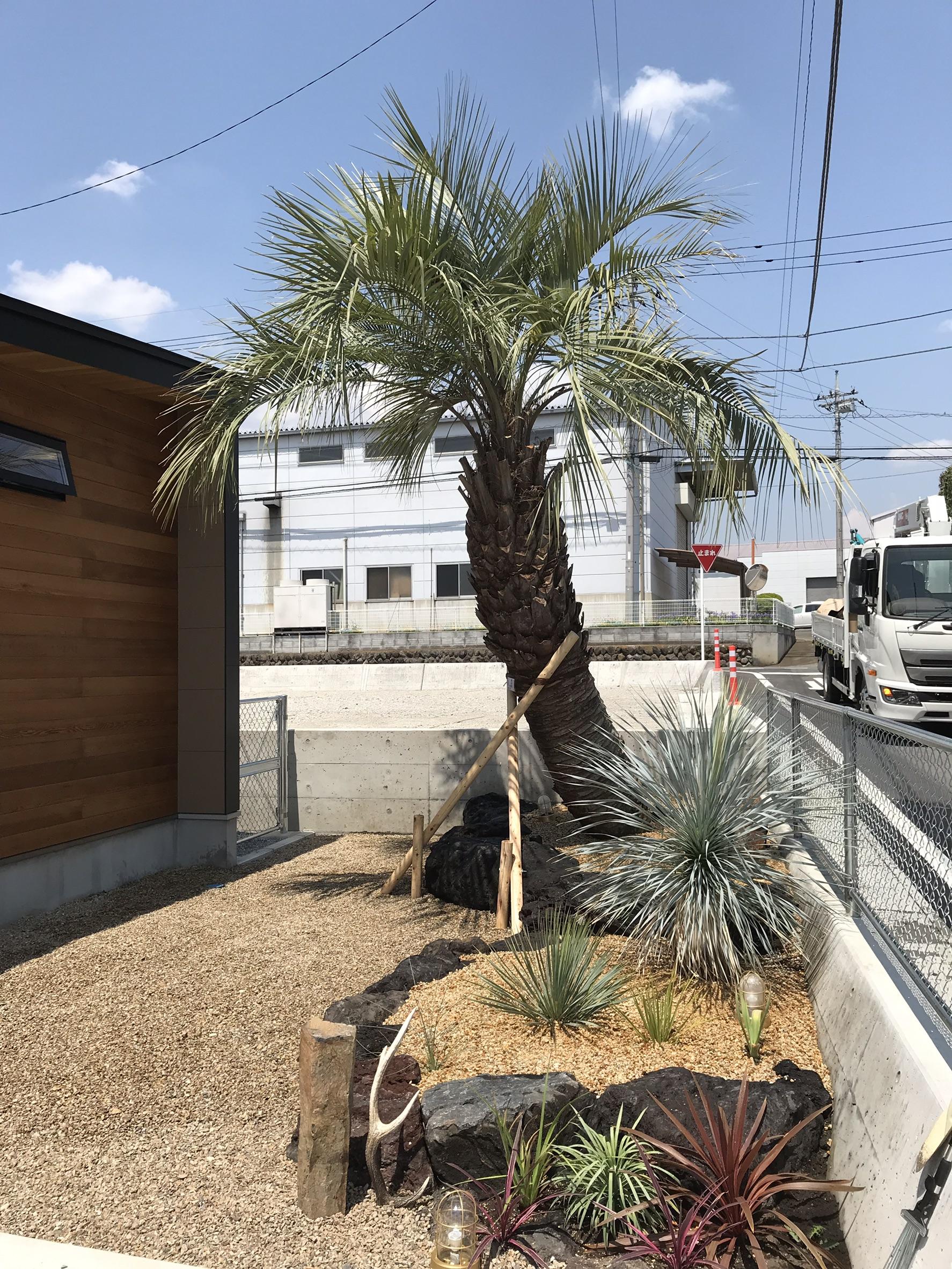 高崎市内 ココスヤシ植栽/砂利