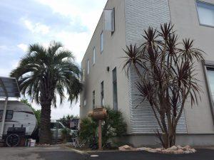 桐生市内 赤ドラセナ植栽