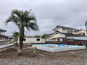 長野県佐久市内 ココスヤシ・ソテツ・ロストラータ植栽