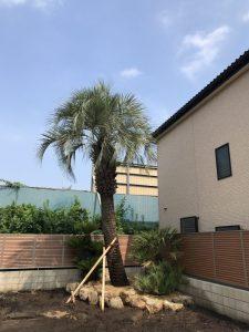さいたま市内 ココスヤシ・チャメロップス・ソテツ植栽