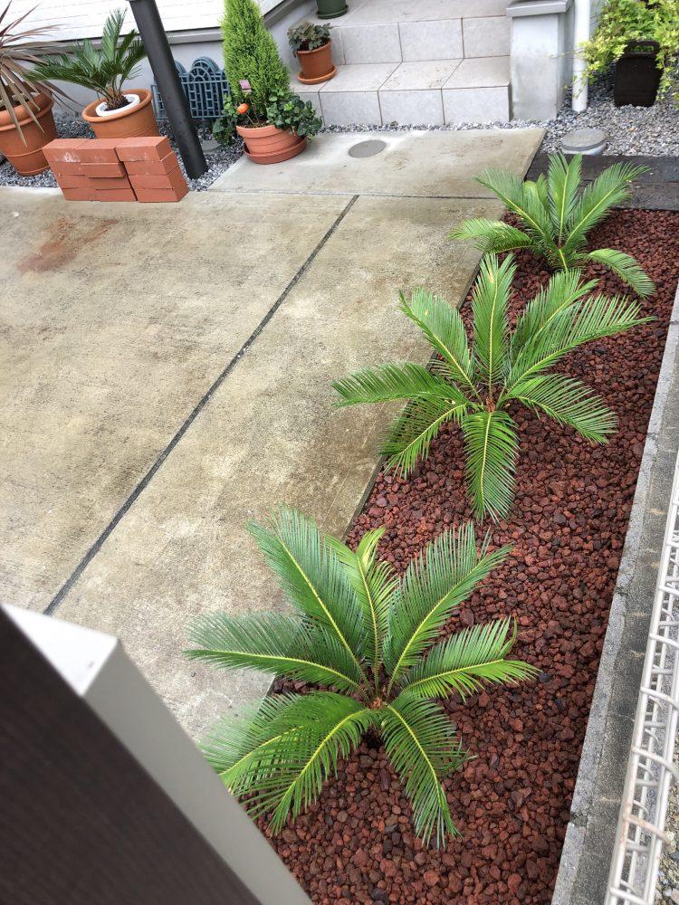 さいたま市内 ドラセナ・ソテツ植栽 赤砂利