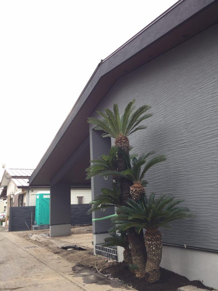 宇都宮市内 ココスヤシ・ソテツ植栽