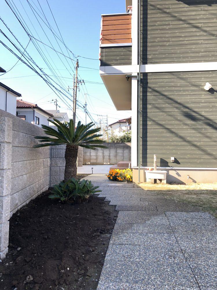 さいたま市内 ココスヤシ・ソテツ植栽