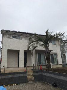 加須市内 ココスヤシ植栽