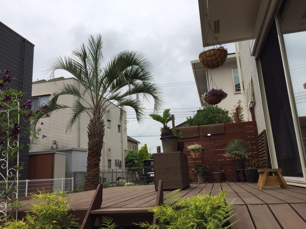 川越市内 ココスヤシ植栽