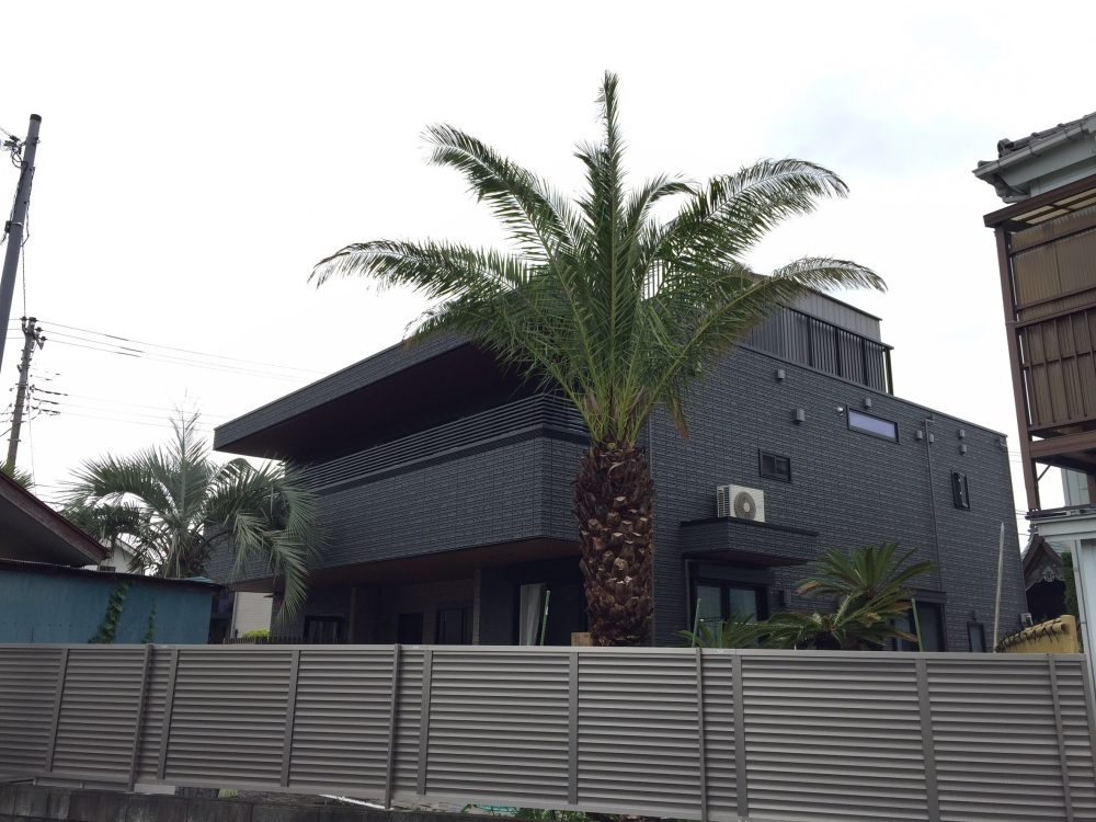東京都内 カナリーヤシ植栽