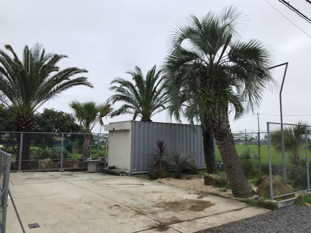 松伏町内 カナリーヤシ・オニサバルヤシ植栽