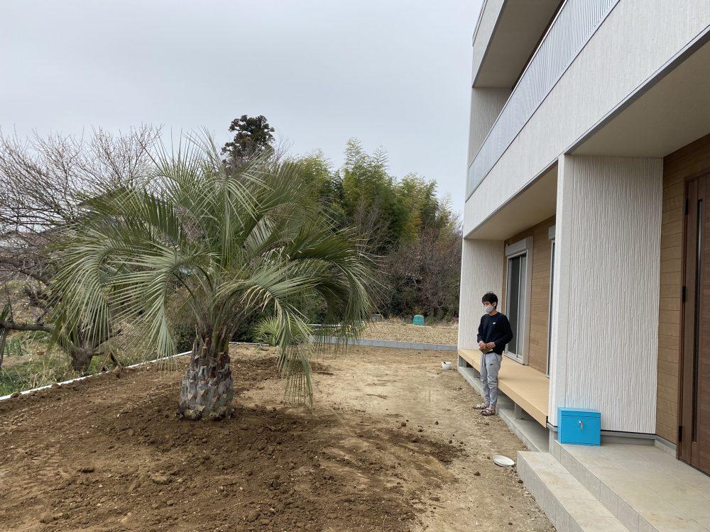 吉見町内 ココスヤシ植栽