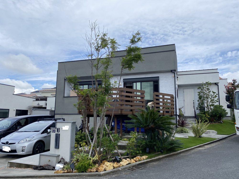 横須賀市内 ココスヤシ植栽
